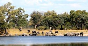Elefante africano, Bwabwata animais selvagens do safari de Namíbia, África video estoque