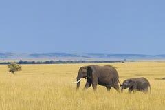 Elefante africano com vitela Foto de Stock Royalty Free