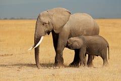 Elefante africano con el becerro imagen de archivo