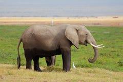 Elefante africano con el becerro fotografía de archivo libre de regalías