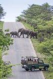 Elefante africano do arbusto no parque nacional de Kruger, África do Sul Imagem de Stock