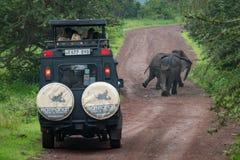Elefante africano due davanti alla jeep Immagini Stock Libere da Diritti