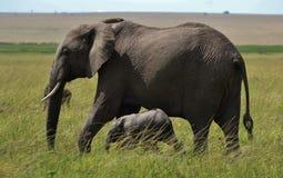 Elefante africano e bebê Fotos de Stock Royalty Free