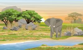 Elefante africano en un lugar de riego Sabana, río, piedras grandes, montañas y un árbol del acacia