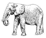 Elefante africano isolato su bianco illustrazione di stock
