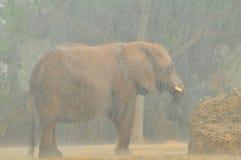 Elefante africano na chuva pesada imagem de stock royalty free