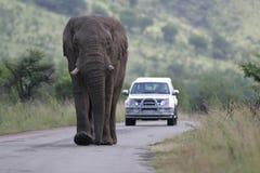 Elefante africano nel Sudafrica immagini stock libere da diritti