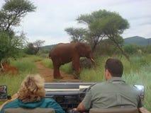 Elefante africano nell'azienda agricola sudafricana del gioco Fotografia Stock