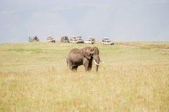 Elefante africano nella sosta nazionale di Serengeti Fotografie Stock Libere da Diritti