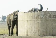 Elefante africano que bebe do armazenamento da água foto de stock