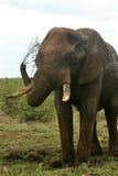 Elefante africano que pulveriza Mub Fotos de Stock Royalty Free