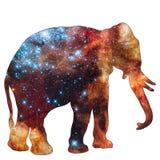 Elefante animale dello spazio immagini stock