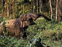 Elefante asiático Foto de Stock Royalty Free