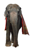 Elefante asiático aislado Imagen de archivo libre de regalías
