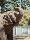 Elefante asiático con el camión aumentado foto de archivo