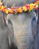 Elefante asiático con la guirnalda floral en la pista Foto de archivo libre de regalías