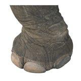 Elefante asiático de la pierna Foto de archivo libre de regalías