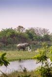 Elefante asiático en el riverbank en el parque nacional de Bardia, Nepal imagenes de archivo