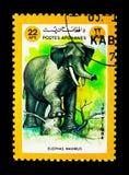 Elefante asiático (maximus) del Elephas, serie de los animales, circa 1984 Imagen de archivo libre de regalías
