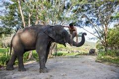 Elefante asiático y el hombre Fotografía de archivo libre de regalías