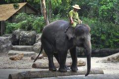 Elefante asiático y Mahout Imagenes de archivo