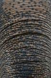 Elefante asiatico Fotografia Stock Libera da Diritti