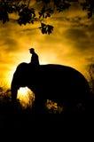 Elefante asiatico Immagine Stock