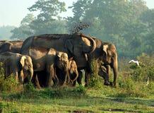 Elefante asiatico Immagine Stock Libera da Diritti