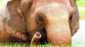 Elefante asiatico in acqua fotografie stock