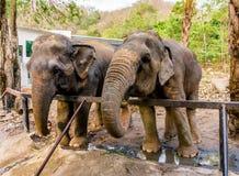 Elefante asiatico del fuoco selettivo nello zoo Fotografia Stock