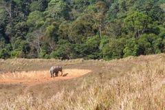 Elefante asiatico nel saltlick al parco nazionale di Khao Yai, Tailandia Fotografie Stock
