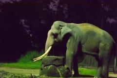 Elefante asiatico nella parte scura della foresta durante la notte safar fotografie stock libere da diritti
