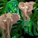 Elefante astratto della pittura due dell'acquerello in foglie verdi MONSTERA Immagine Stock