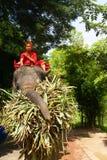 Elefante, Ayutthaya, Tailandia. Fotografia Stock Libera da Diritti