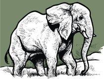 Elefante in bianco e nero illustrazione di stock