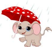 Elefante bonito do bebê sob o guarda-chuva Fotografia de Stock
