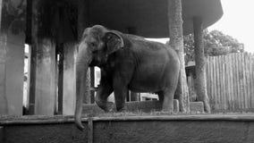 Elefante bonito no jardim zoológico Fotos de Stock Royalty Free