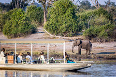 Elefante bonito no parque nacional de Chobe em Botswana Fotografia de Stock Royalty Free
