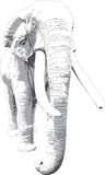 Elefante branco Foto de Stock Royalty Free