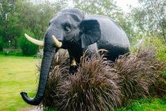Elefante - Bush Fotografia Stock