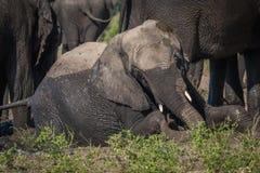 Elefante cansado también para colocarse en riverbank imagen de archivo