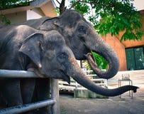 Elefante Chang Thai fotografía de archivo libre de regalías