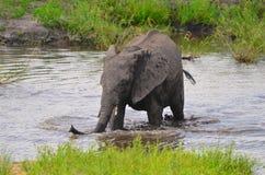 Elefante che bagna al fiume Immagini Stock Libere da Diritti