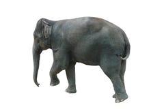 Elefante che cammina su un fondo bianco in Tailandia Immagini Stock
