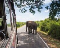 Elefante che cammina sulla strada al tramonto Fotografie Stock
