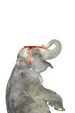 Elefante che fa i trucchi fotografia stock libera da diritti
