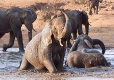 Elefante che gioca in acqua con resto immagini stock