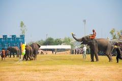 Elefante che gioca il lato degli aerostati dei dardi immagini stock