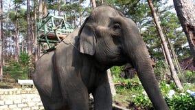 Elefante che ondeggia con il tronco, le orecchie e la coda video d archivio