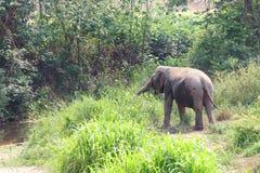 Elefante che spruzza con acqua Fotografia Stock Libera da Diritti